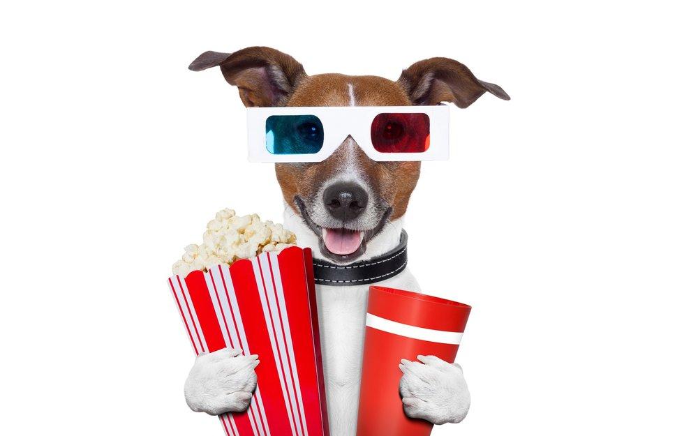 Movie Dog.jpeg