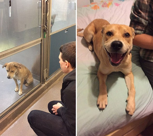 dog adoption before after