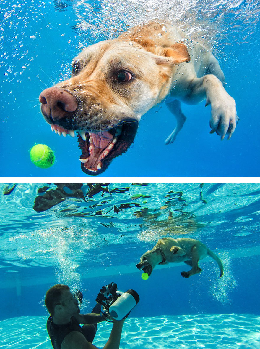 dog underwater photoshoot behind the scene