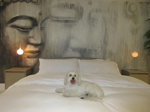 Lucca-bed-500.jpg