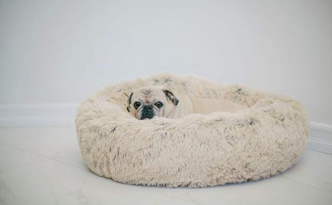 VegNews.DogBed.png