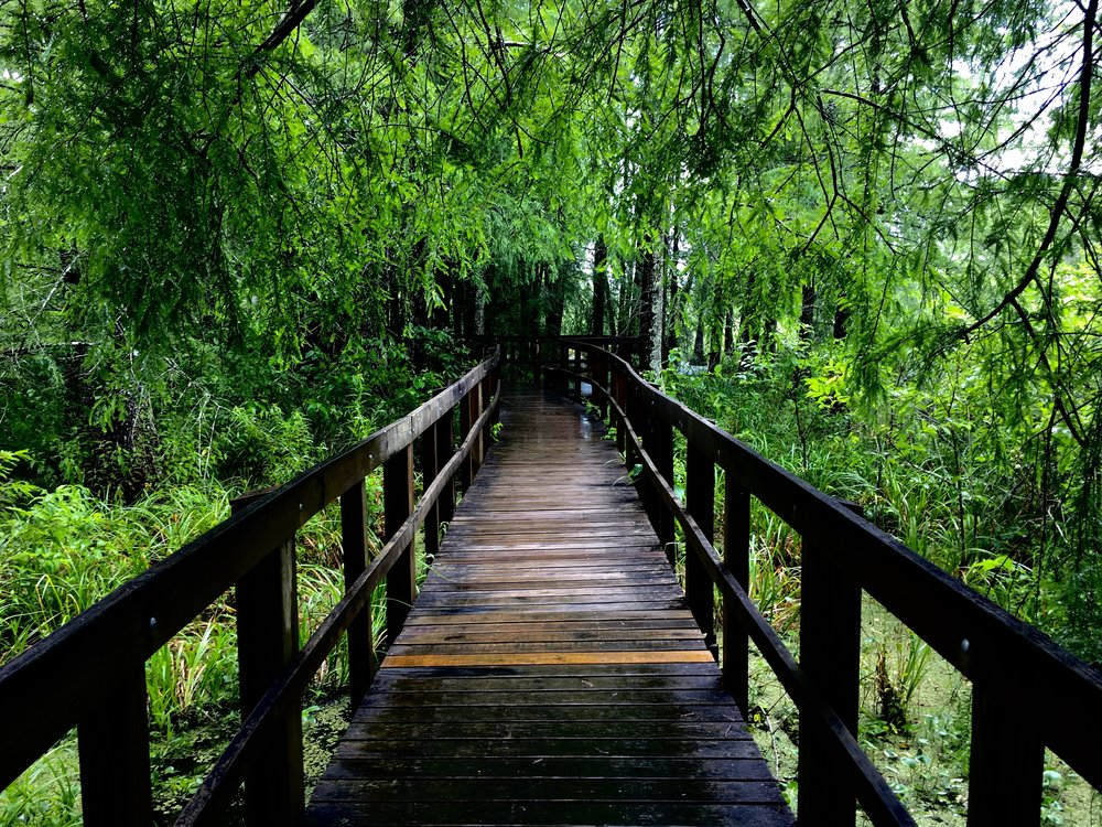 The boardwalk at the Cypress Island Preserve maintained by the Nature Conservancy.