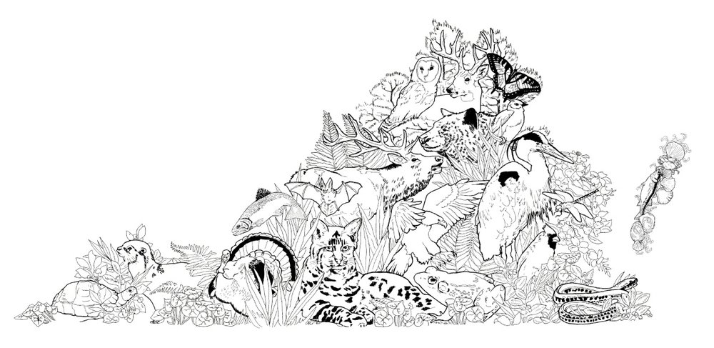 Animal Coloring Poster For VA Dept Of Game And Inland Fisheries