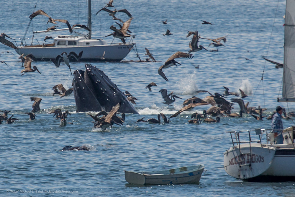 Whale watching off Avila Beach. Photo by Michael L. Baird, CC BY 2.0.