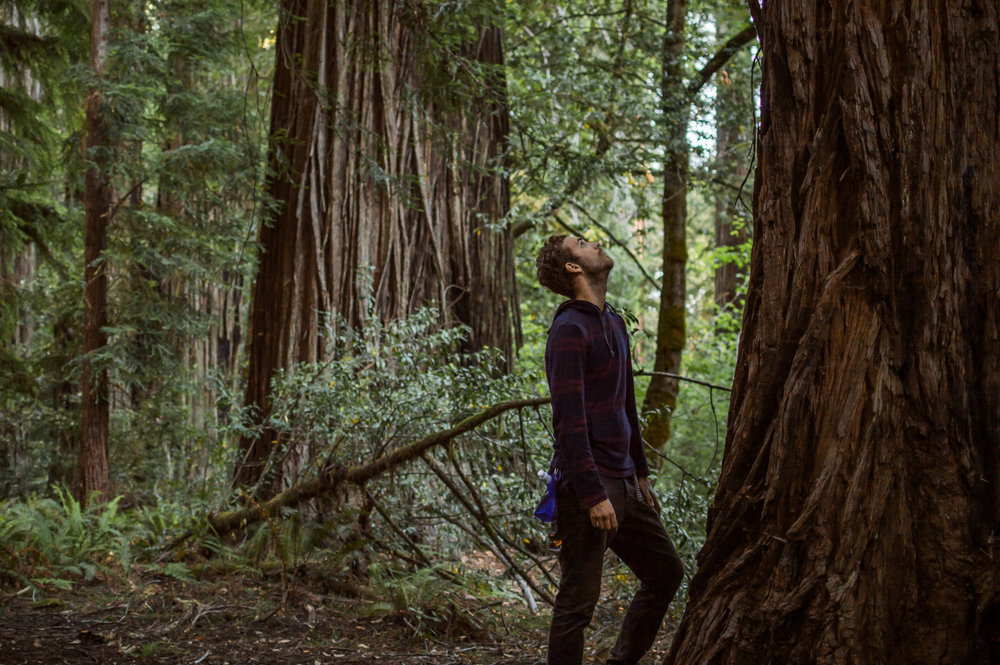 In the Sticks: Coastal Redwoods, California