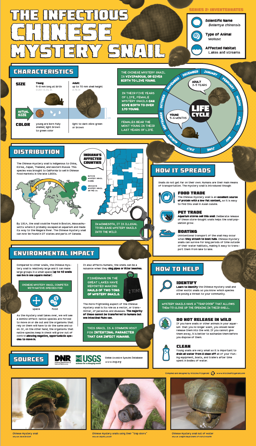 Invasive Species Posters - Chinese Mystery Snail