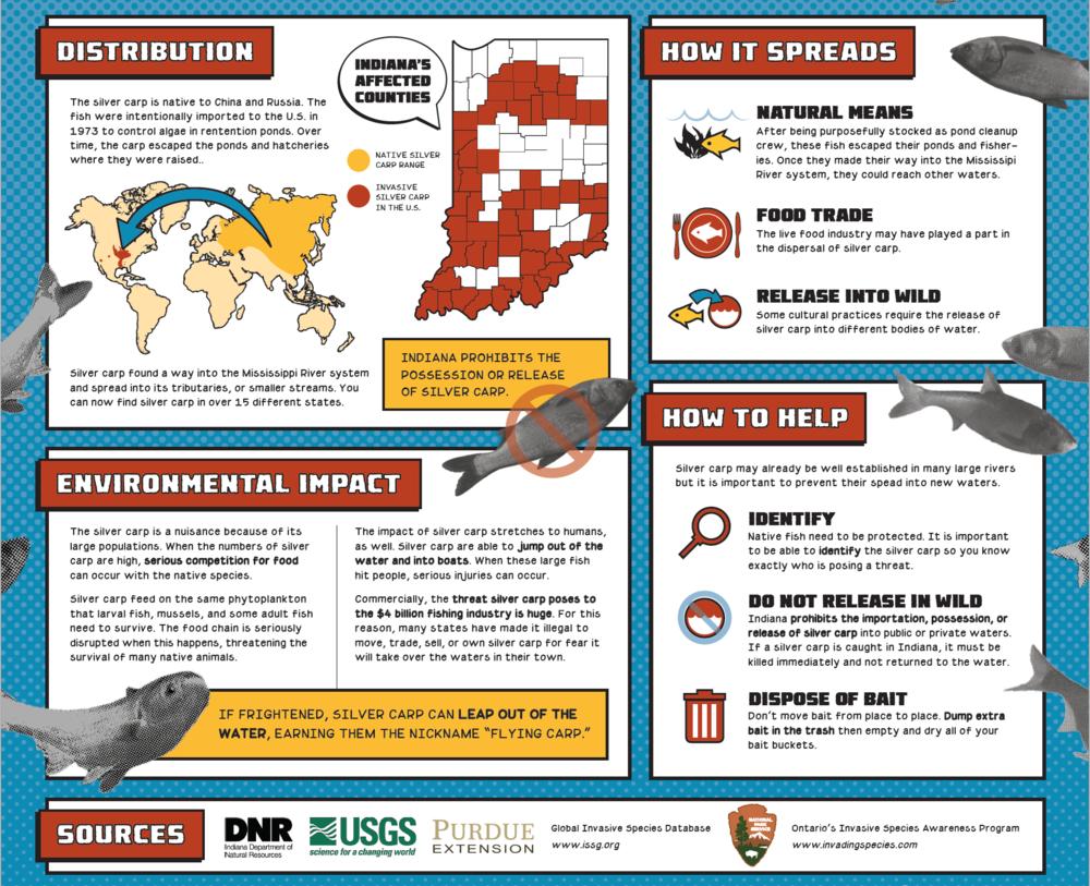 Invasive Species Posters - Silver Carp