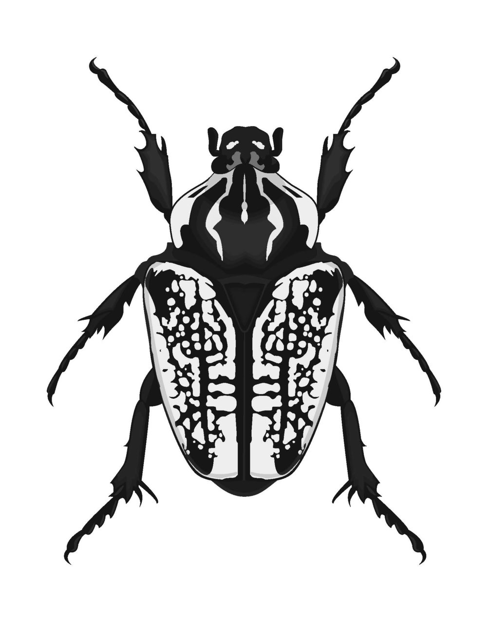 Goliath Beetle, 2012
