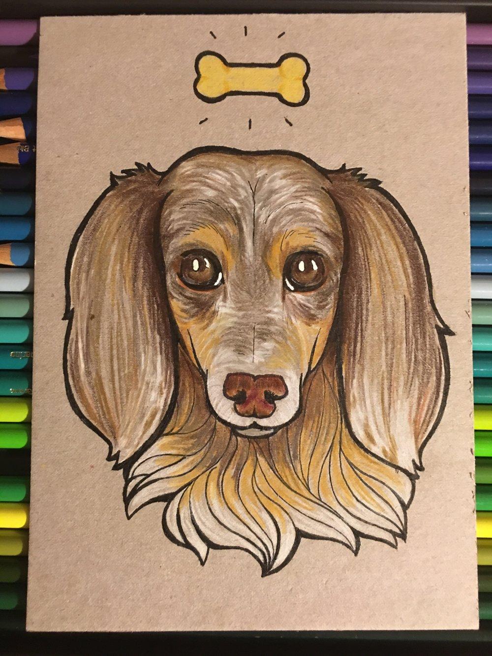 Oliver the Weiner Dog, 2017