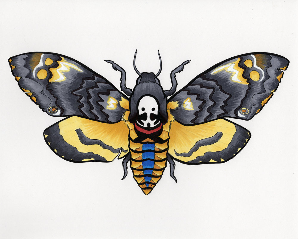 Deaths Head Moth (2018)