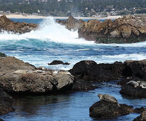 Point Lobos Moss Cove sea lions photograph