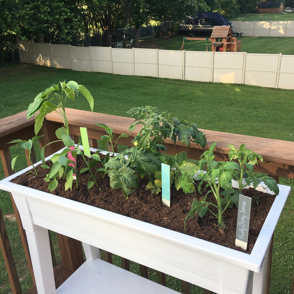 my simple summer porch garden tomatoes peppers a cheerful life blog
