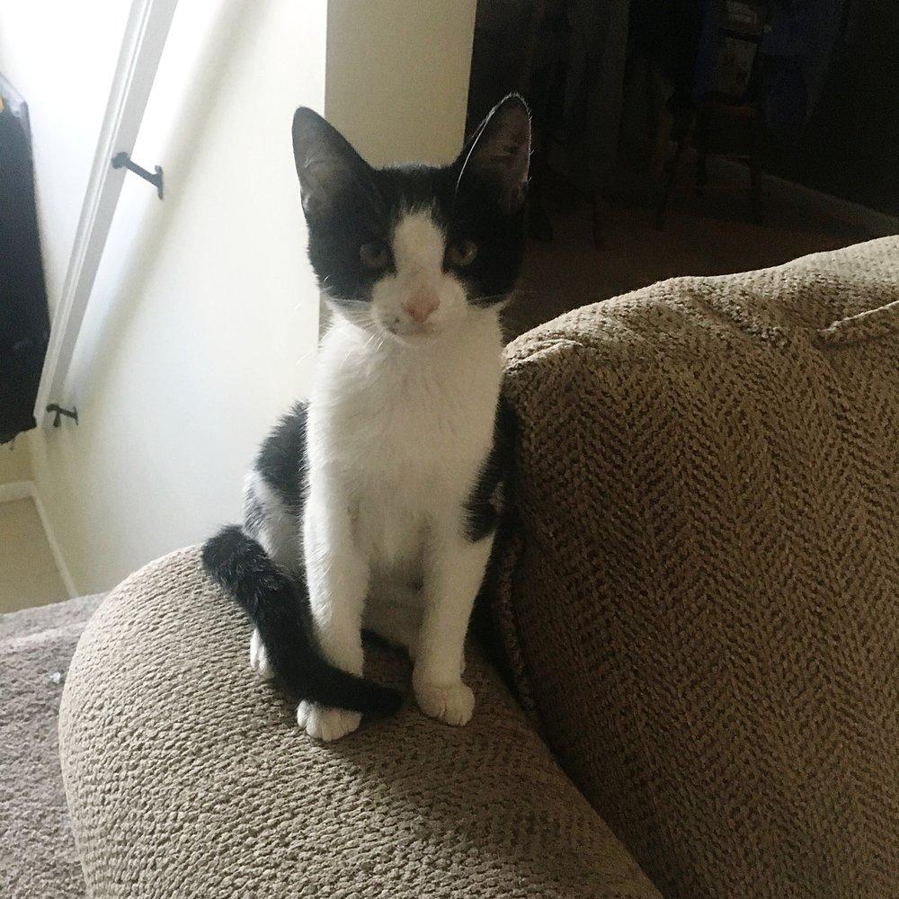 Meet Augustus!