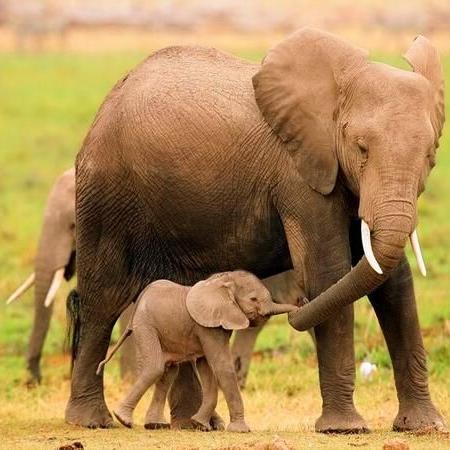 2495a88240d41ee006870f91f81e7382--elephant-love-baby-elephants.jpg