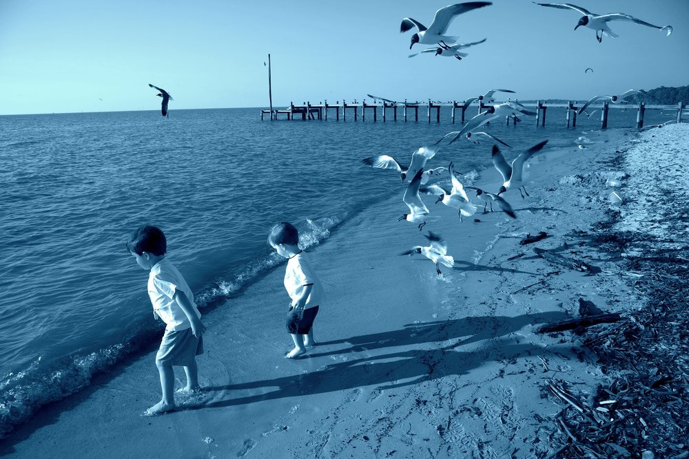 Mobile Bay, Birds, Children Play, Deep South, Alabama