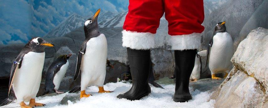 Tennessee Aquarium's Holidays Under the Peaks & IMAX 3D through January 1st