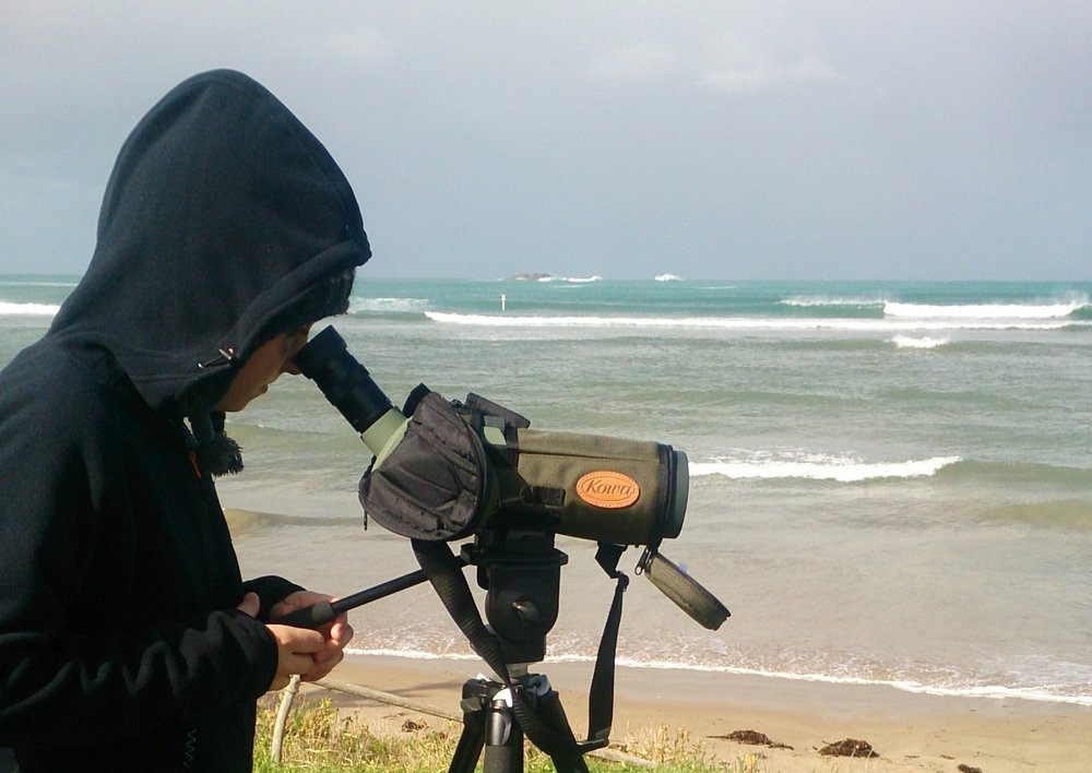 HOODED PLOVER MONITORING