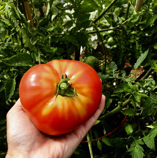 Let's talk tomatoes! On this week's episode of the #ebpodcast, @seattleurbanfarmco and I are chatting about best practices for planting these babies, along with a review of our favorite varieties. Tune in today - link in profile!