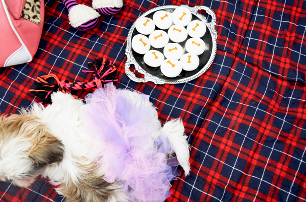 sprinkles doggie cupcakes