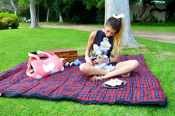 picnics with dogs