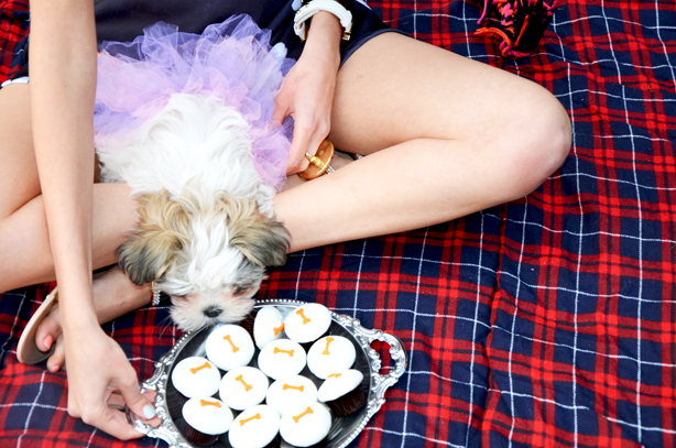 sprinkle doggie cupcakes