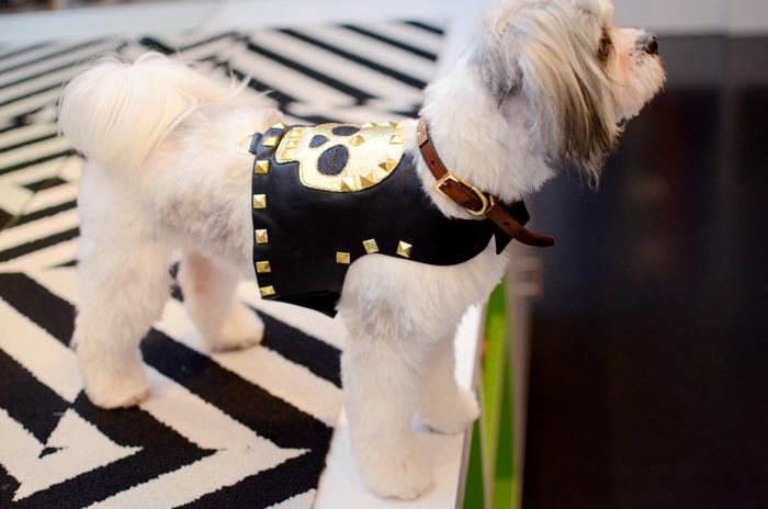 rocker chick dog costume