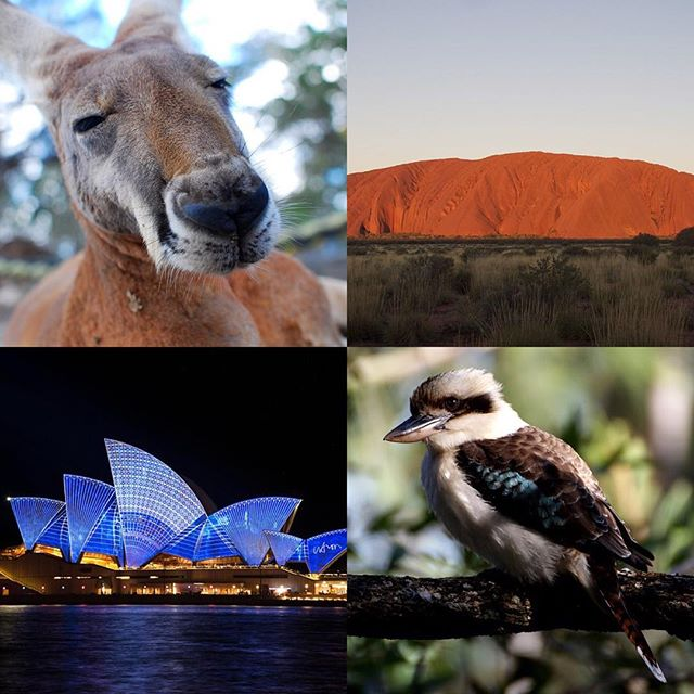 From our family to yours, we wish you a wonderful and safe #australiaday #tisecau #australia #sydneyhomes