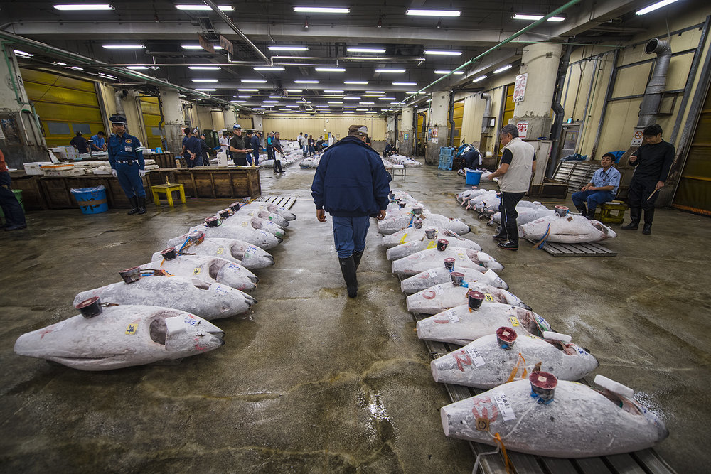 vendors checking out the tuna before the auction