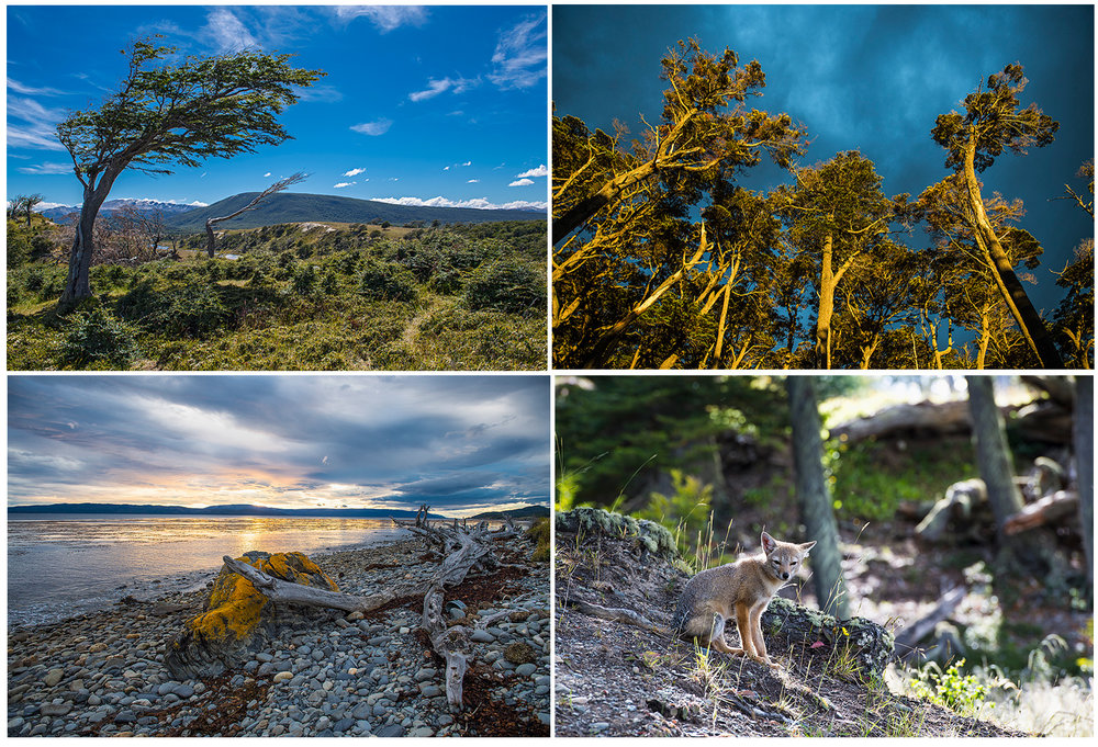 scenery and wildlife in Patagonia