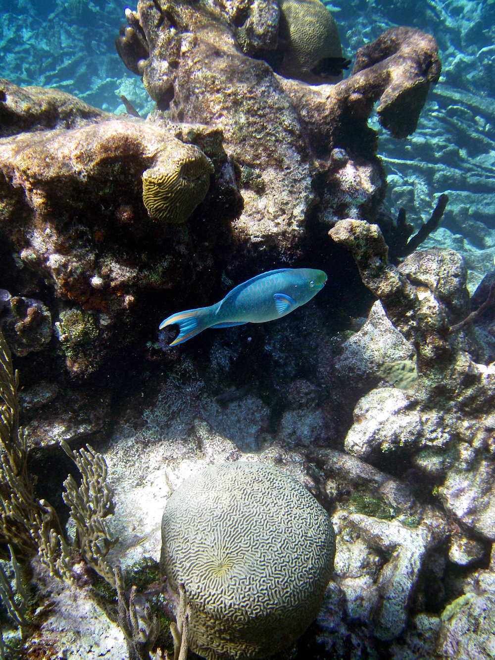 Parrotfish.jpg