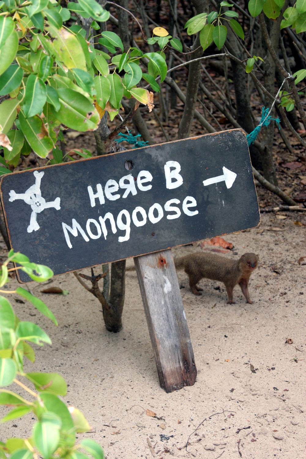 mongoose-bbq.jpg
