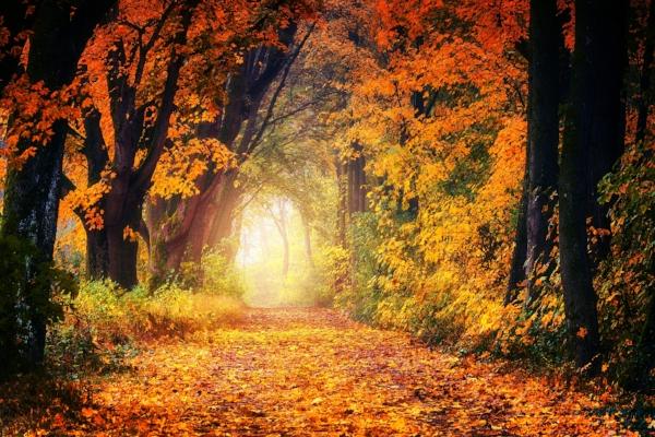 autumn-3186876_1920.jpg