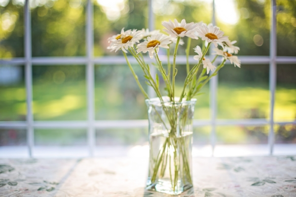 bloom-blossom-daisies-531597 (1).jpg
