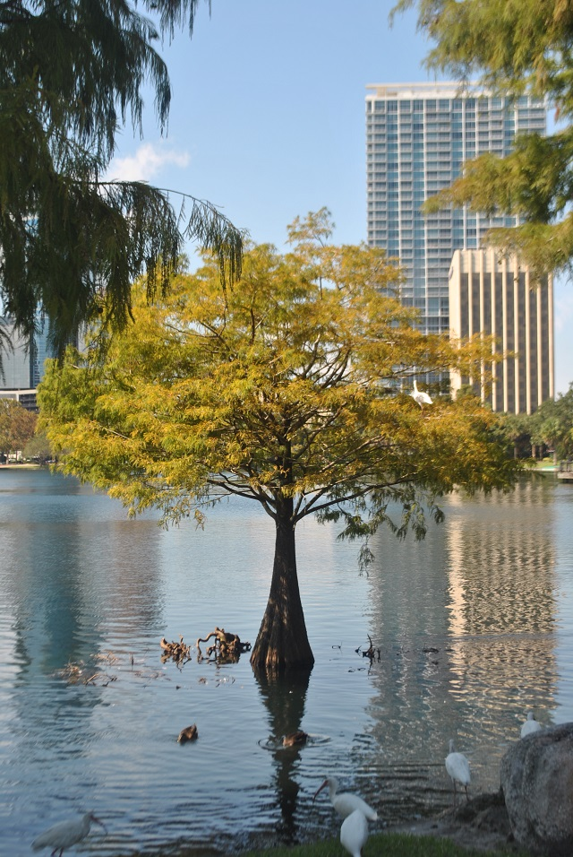lake_eola_downtown_orlando
