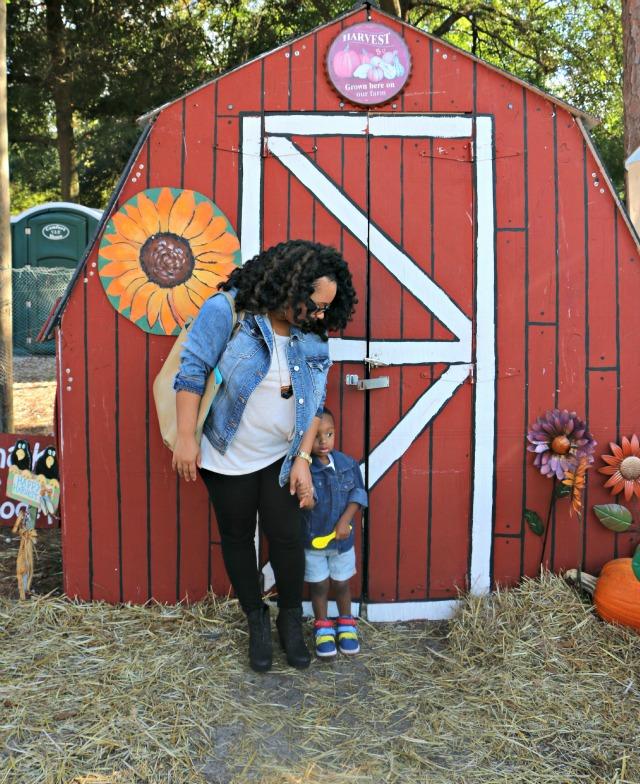 the_pumpkin_patch