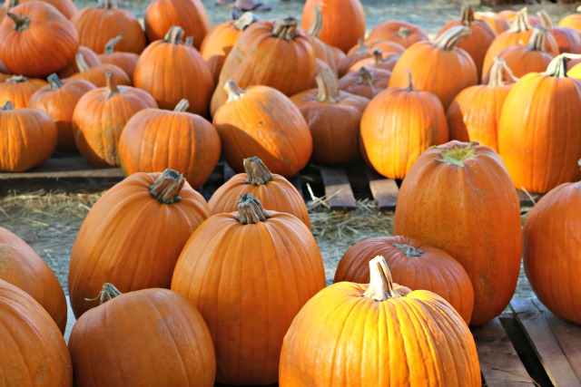 the_pumpkin_patch_123777