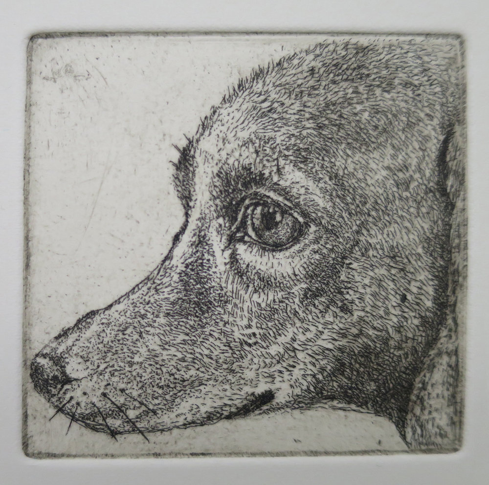 Head of dog   Etching