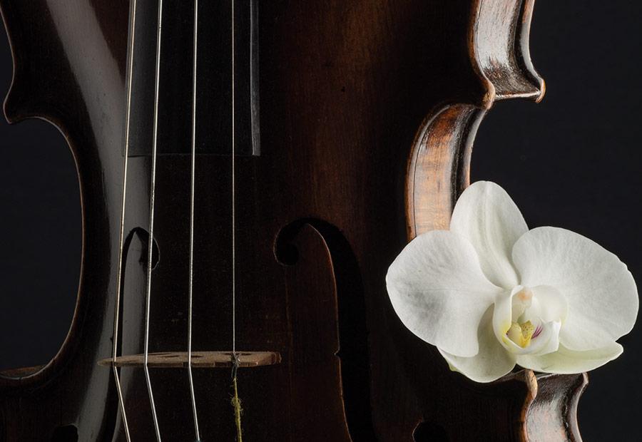 SINGS-violin.jpg