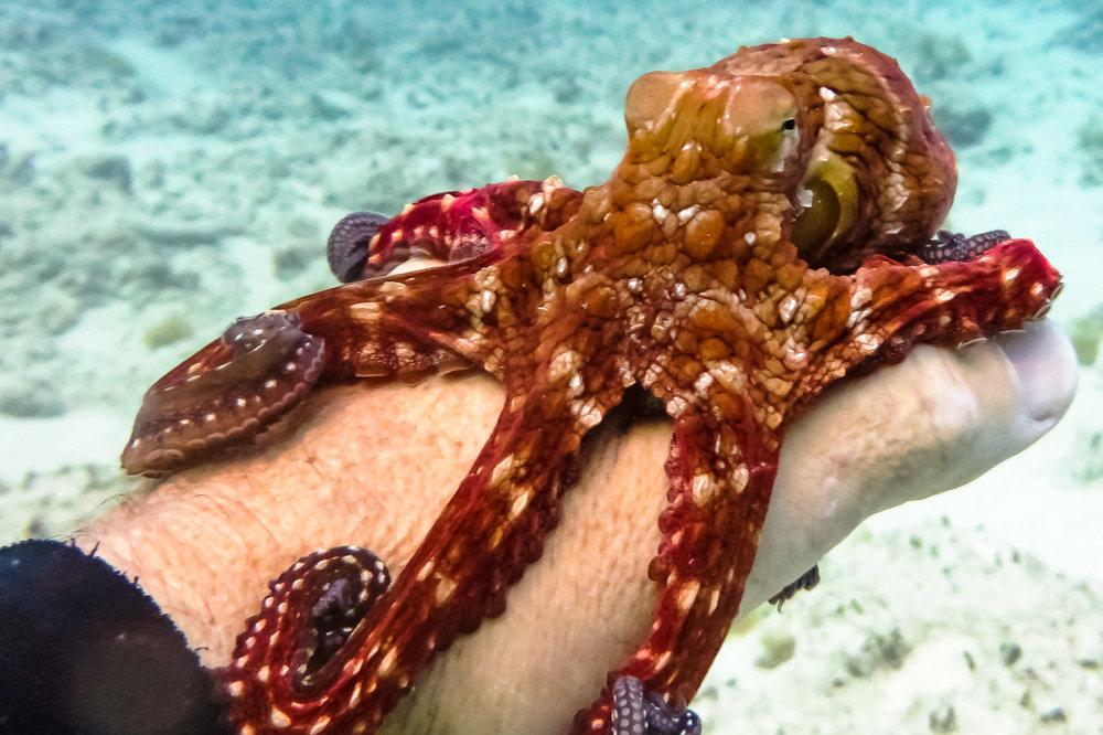 ocean-life--2.jpg