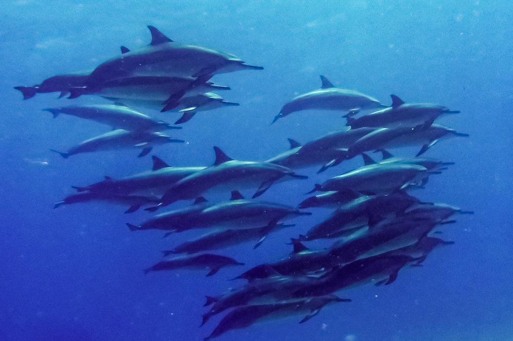 ocean-life--4.jpg