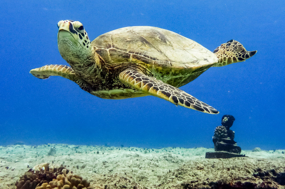 ocean-life--6.jpg