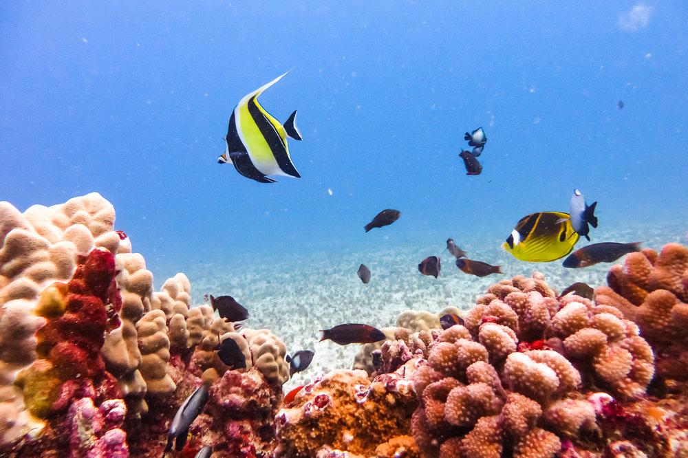ocean-life-0373.jpg