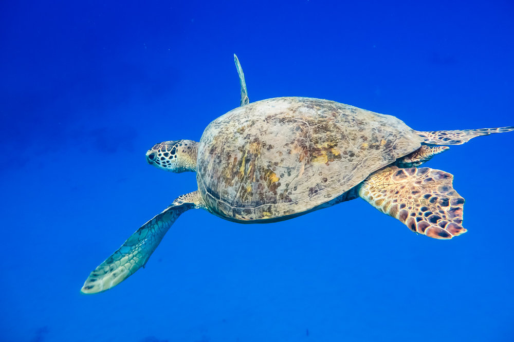 ocean-life-0442.jpg