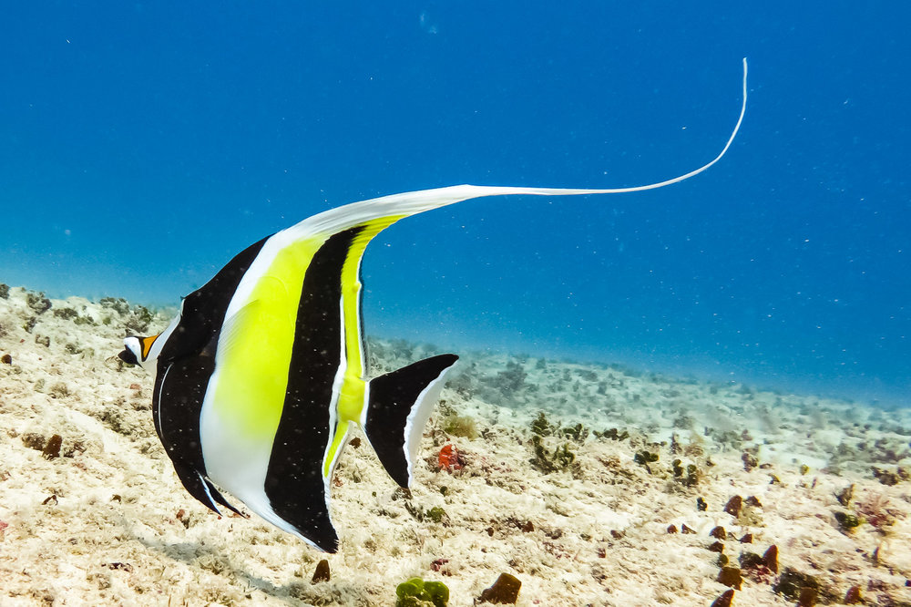 ocean-life-1367.jpg