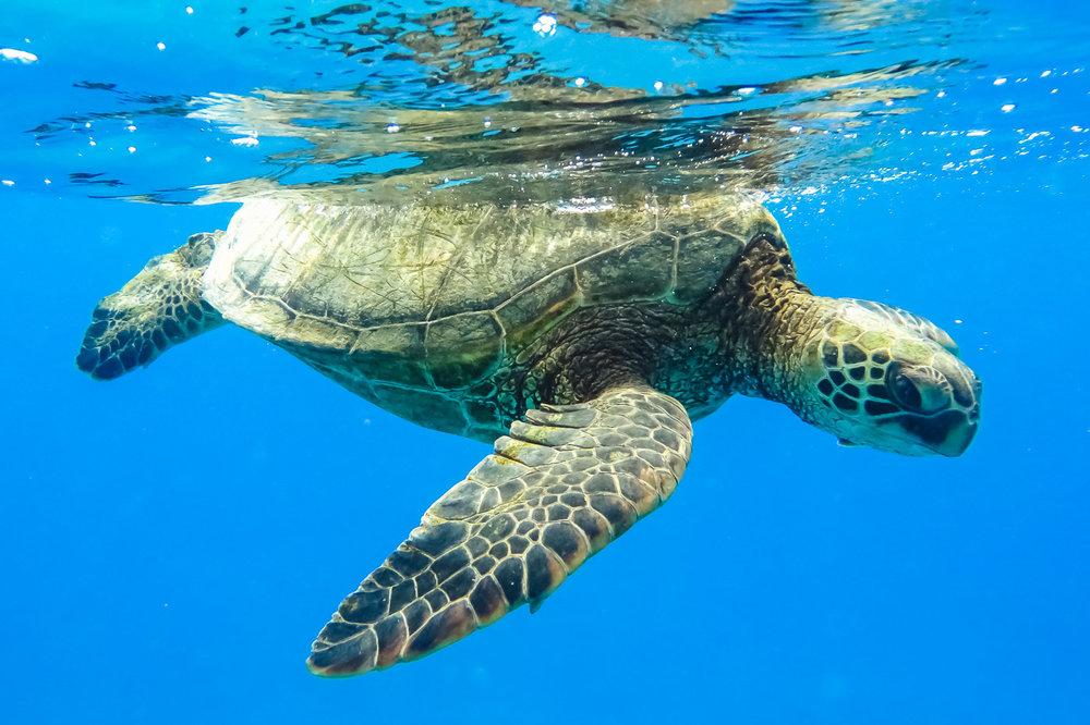 ocean-life-1455.jpg