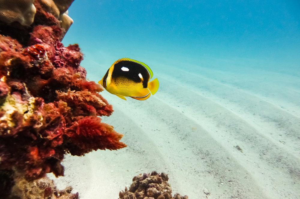 ocean-life-1720.jpg