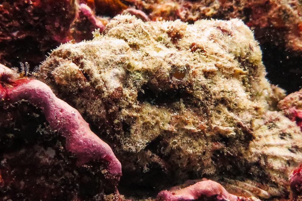 ocean-life-1751.jpg