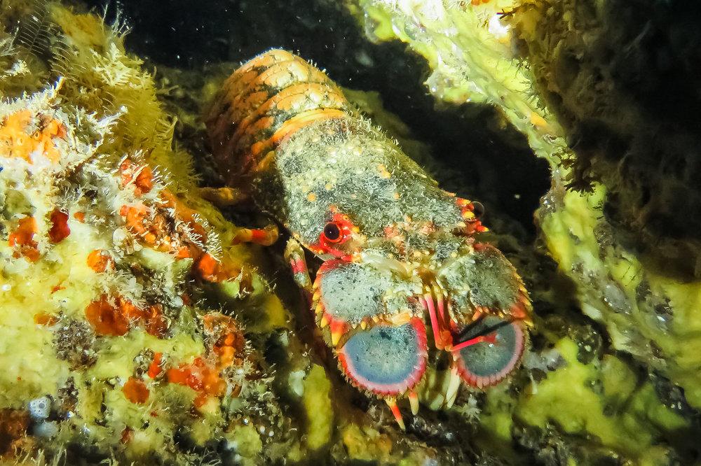 ocean-life-2195.jpg