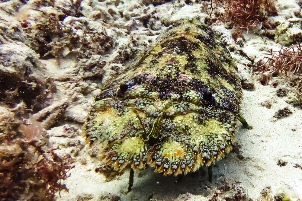 ocean-life-5916.jpg