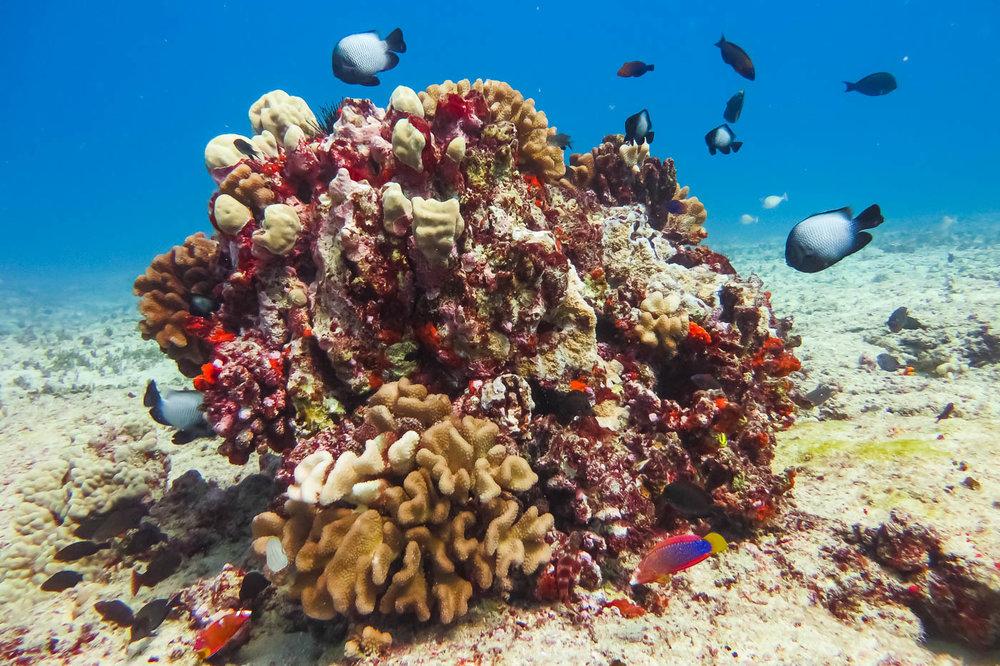 ocean-life-6185.jpg